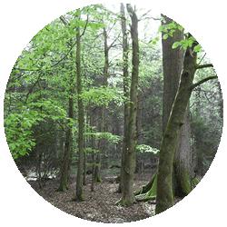 1-trees-250×250