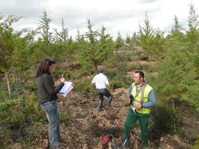 Forestry activity